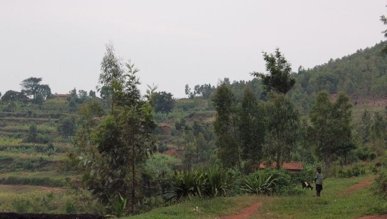 ルワンダの丘景色