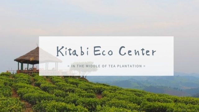 ルワンダの紅茶畑見学!Kitabi Eco Center