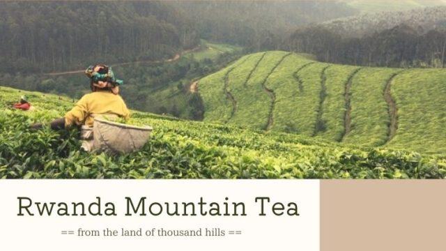ルワンダは紅茶の名産地|紅茶農園見学へ行ってきた!