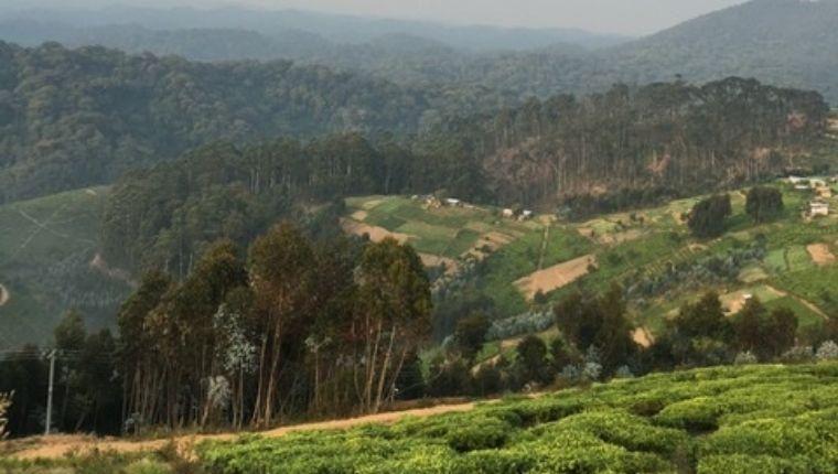どこまでも広がる緑の丘!茶畑は圧巻