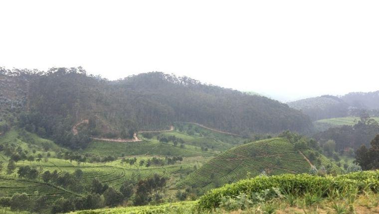 茶畑の中にポツンとあるKitabi Eco Center
