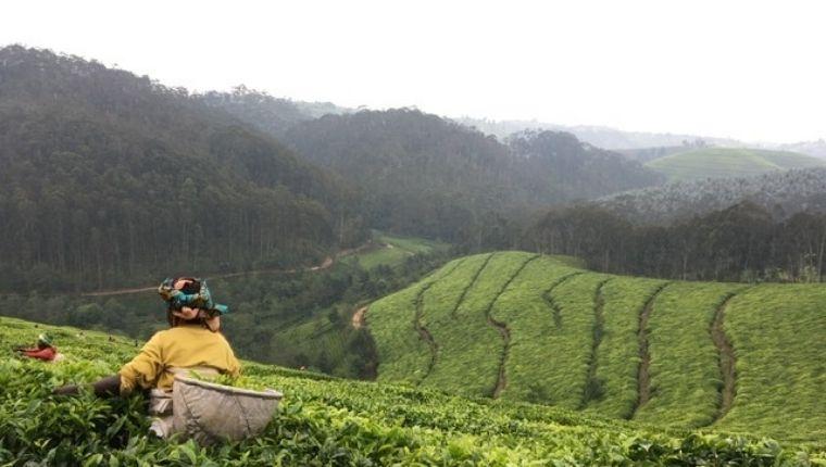 まとめ:ルワンダ紅茶への愛着が増した農園見学